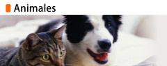 backpage sitio web de citas en metepec